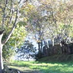 Camping l'Albadu à Corté