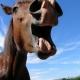 La fête du cheval – Cavall'in festa