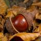 Fête du marron – A ghjurnata di a castagna