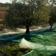 La foire de l'olivier – A fiera di l'alivu