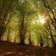 Vizzavona et sa forêt