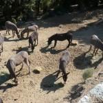 Nos ânes à guissani pour la randonnée en corse